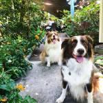dog-friendly dining darwin