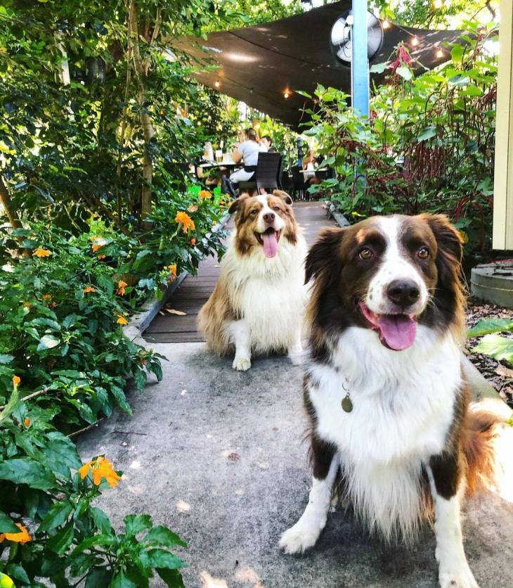 dog-friendly dining darwin